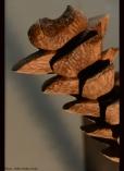 Bois : noyer - Dimensions : 117 cm/ Année 2013