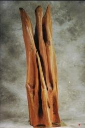 Cyprès - 151 x 120 cm - 2005